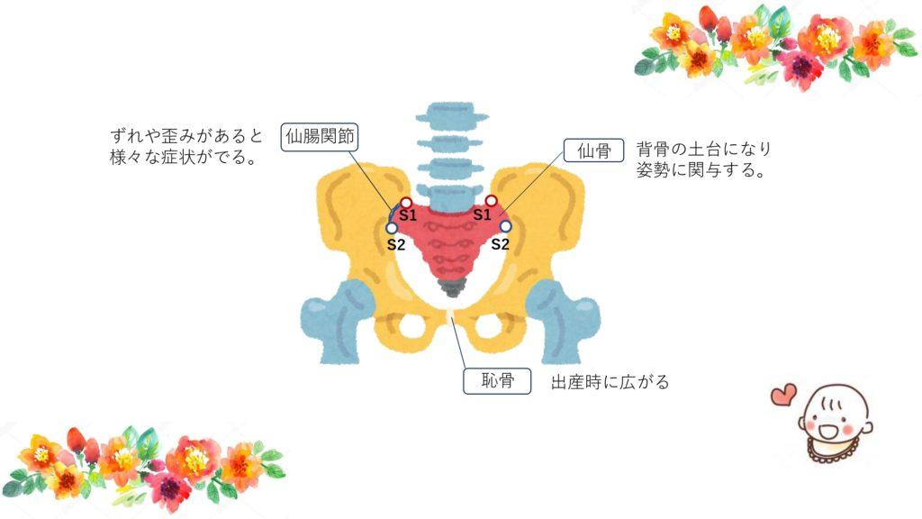 骨盤の構成について