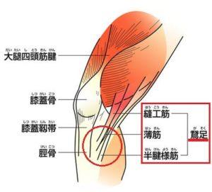 鵞足の説明